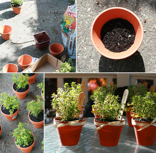 of today making mini potted thyme favors for my friends bridal shower which is tomorrow afternoon its a project ive seen places like martha stewart