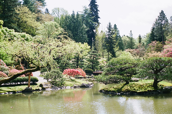 Japanese Garden by Rachel Ball