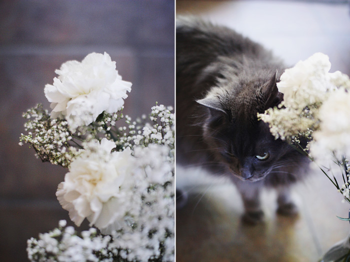 elephantine: baby's breath and carnations