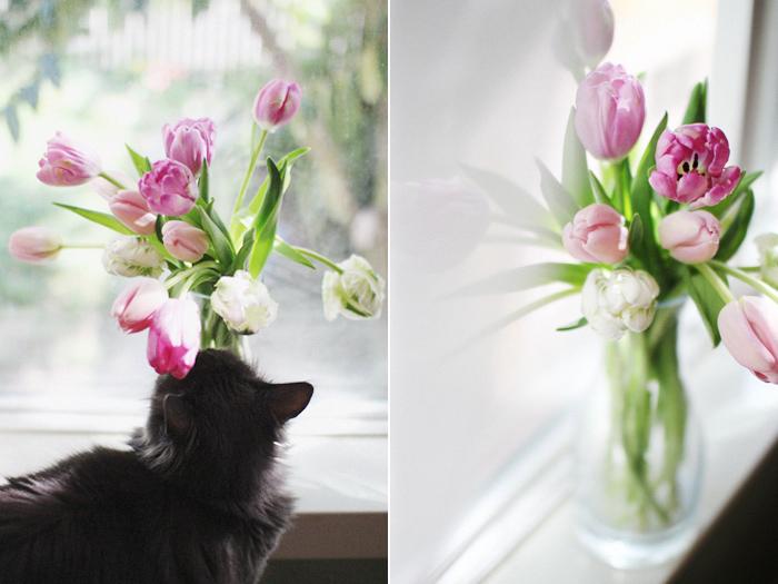 elephantine: tulips