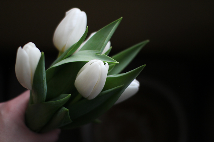 Elephantine: white tulips