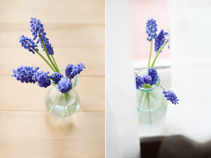 elephantine: grape hyacinth