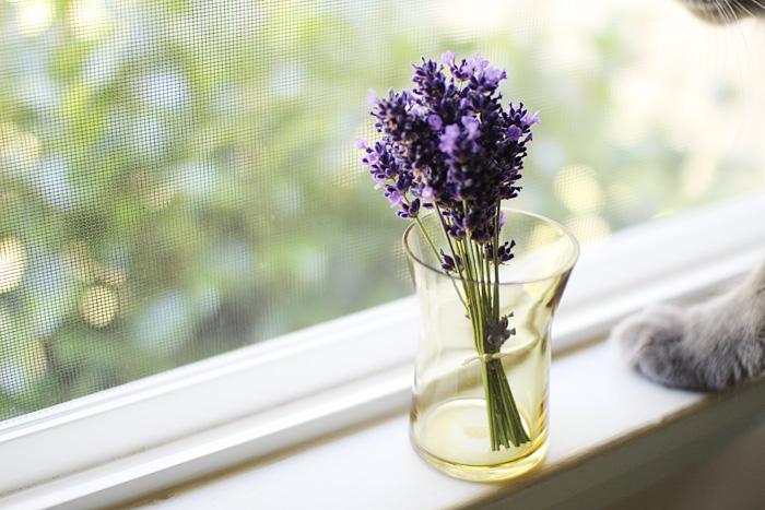 Elephantine: this week's flowers