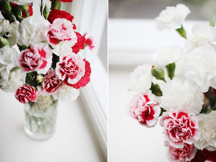 carnations | elephantine