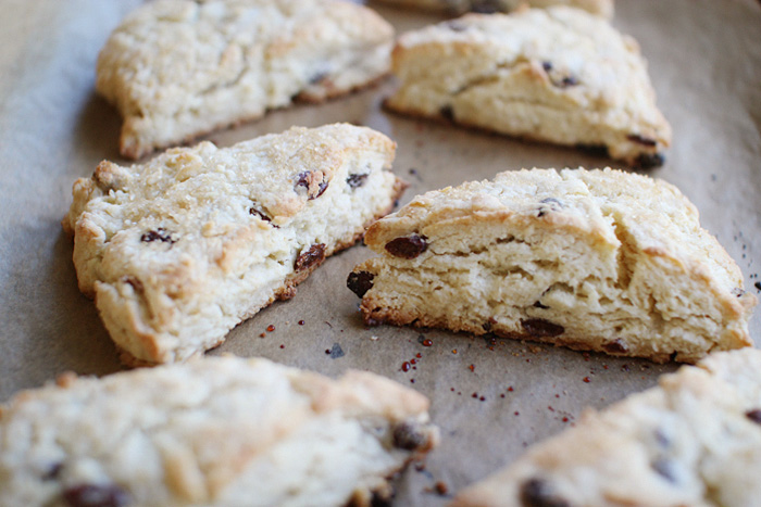 raisin scones | elephantine