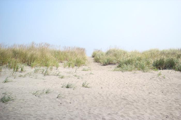 long beach, wa | elephantine