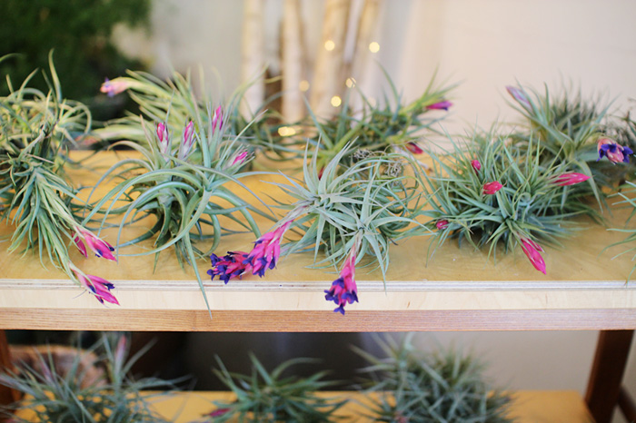 air plants at The Palm Room | elephantineblog.com