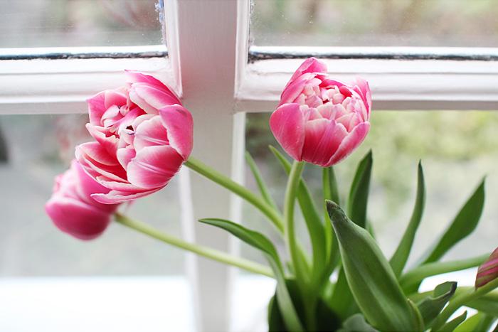 tulips | elephantineblog.com